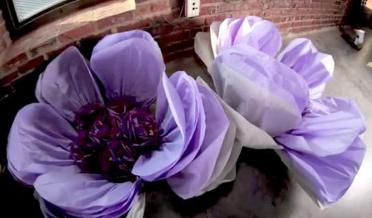 напольные цветы