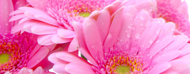 Цветы в букете — душа нараспашку!