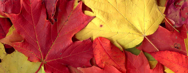 Что можно сделать из осенних листьев поделки