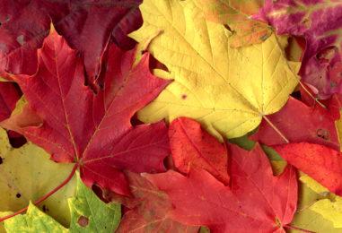 Поделки из осенних листьев: 40 идей в картинках для Праздника Осени!