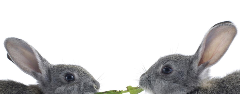 Погоня за трафиком: какой заяц жирнее