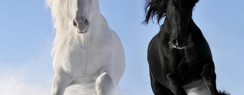 Конкурсы для семейного праздника «Год лошади 2014»