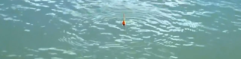организация корпоративной рыбалки за городом
