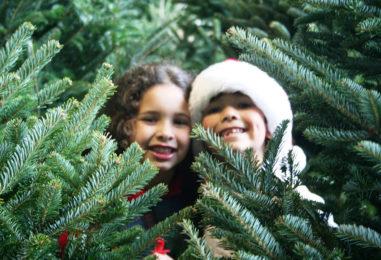 Новогодние программы 2019 для детей и подростков