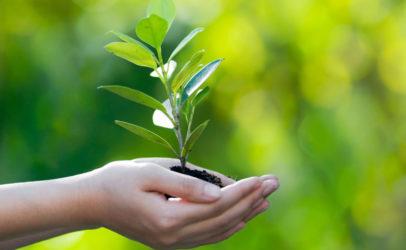Экологический квест для школьников: 2 часа игры, эко-сувенир каждому участнику