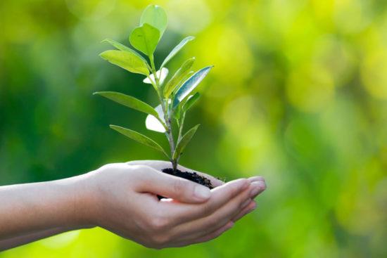 экологический квест для школьников