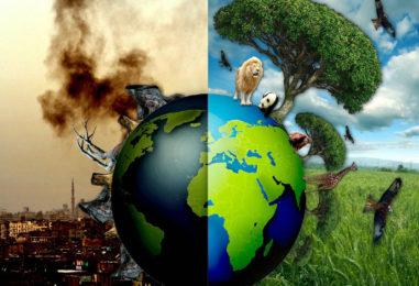 Сценарий детского экологического праздника (2-3 классы): «Волшебная книга библиотекаря Флоса или Спасение планеты Новус»