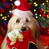 Конкурсы на год Собаки: идеи для семейного праздника «Человек собаке друг»