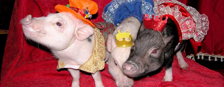 Конкурсы на год Свиньи 2019: домашний Новый год с сюрпризами